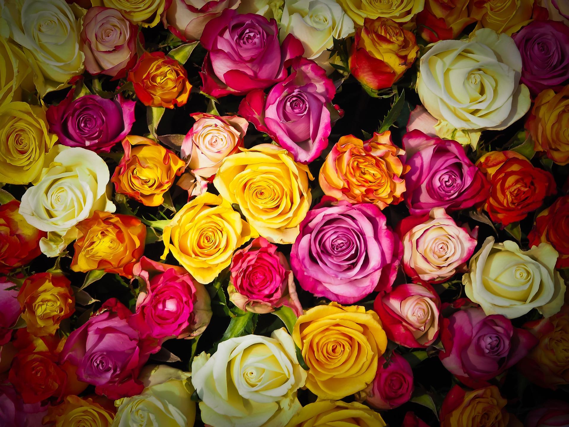 Bunte Rosen zur Jubiläumsfeier